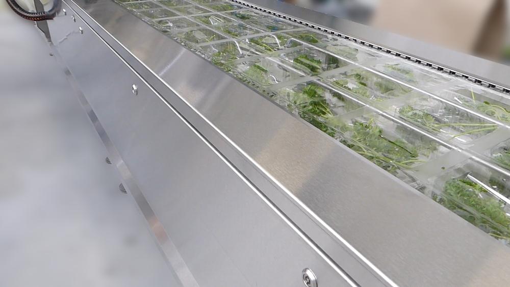 Herbs packaging-loading area